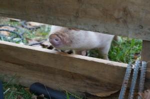 Bacon says Hi!