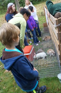 Learning about the rabbits.