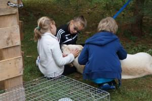 Petting Buddy!