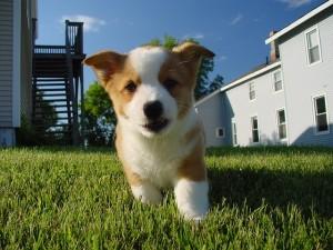 puppy-672085_640