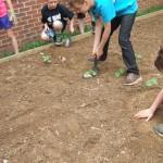 burying fish
