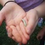 8-5-15 caterpillar