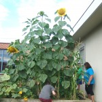 8-5-15 garden