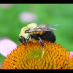 Bumblebees are able to think logically?