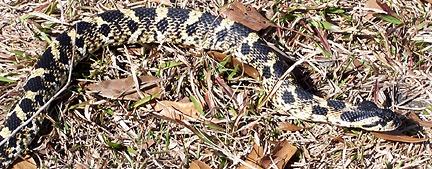 Hey look, a dead snake!