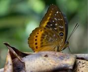 butterfly-web-ready