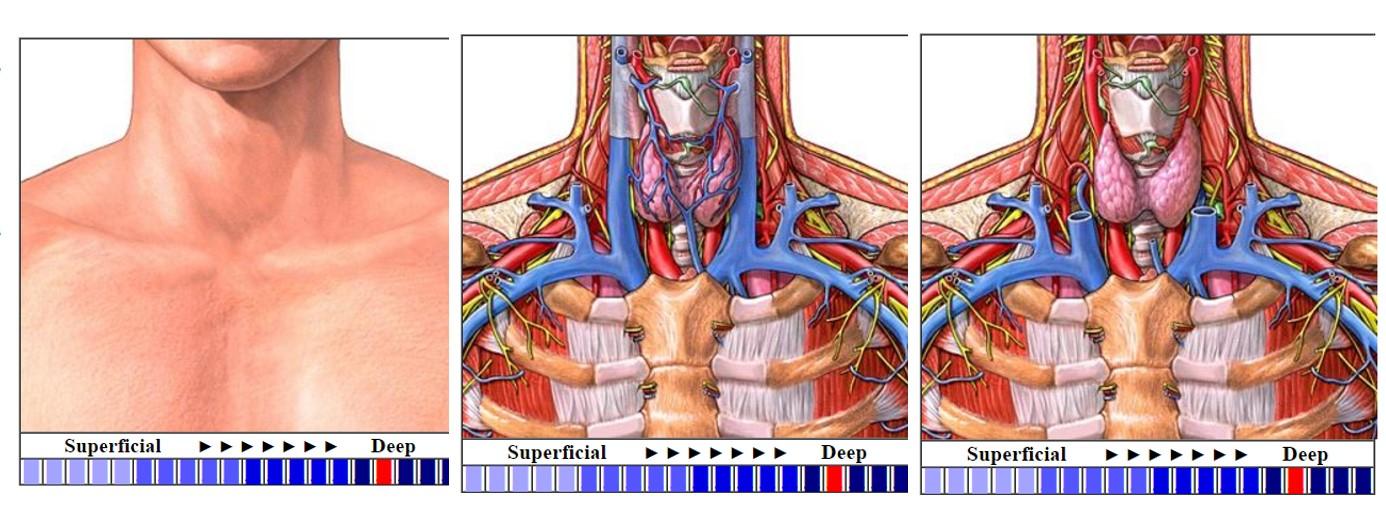 I. Thyroid Anatomy   Pathology Demystified