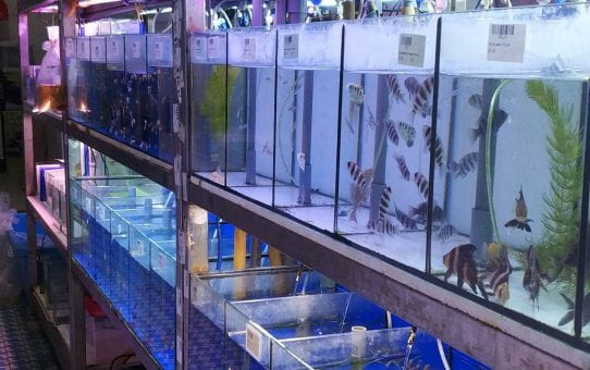 Plastics in the aquarium pet trade: Part 1