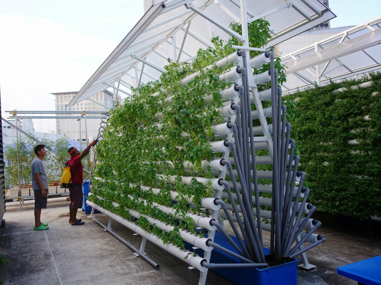 effectiveness of rooftop gardens urban ecology lsm4265. Black Bedroom Furniture Sets. Home Design Ideas