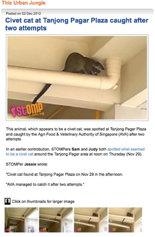 02 Dec 2012 STOMP  Civet