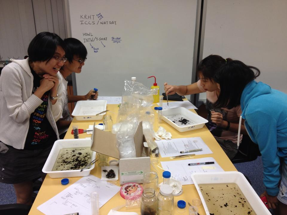 So... what did the civet eat? Research team sorting through civet scat.