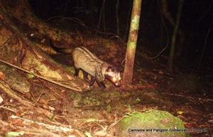 IMAG0011 common palm civet cropped