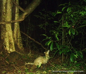 IMAG0019 Small Indian Civet cropped