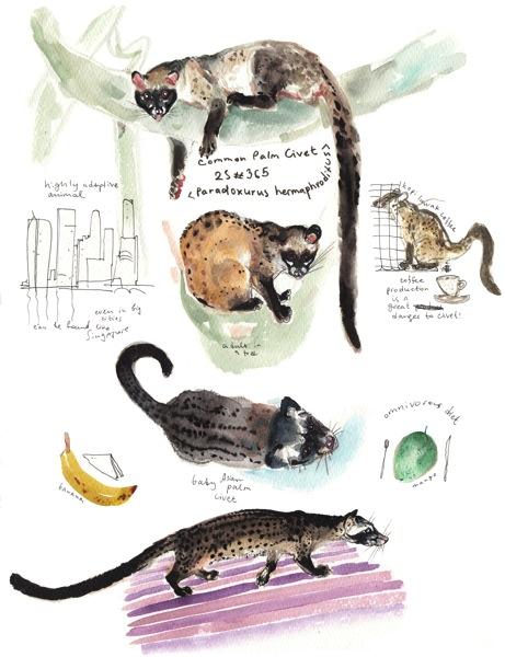 25 common palm civet