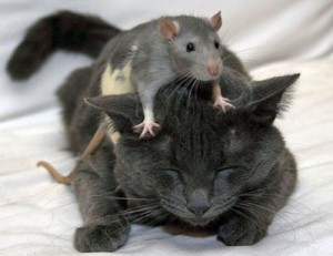 Tom and Jerry: Living happily ever after (Real-life edition)