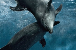 Dolphin @ Play