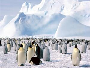 Emperor_Penguins,_Weddell_Sea,_Antarctica