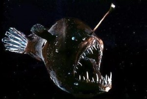 "Another picture of the anglerfish ""glowing"" in the lightless waters"