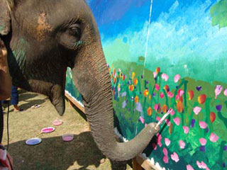 Elephant painting at Maesa Elephant camp in Chiang Mai, Thailand