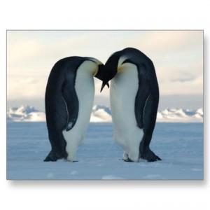 emperor_penguin_kiss_postcard-p239858035829953463qibm_400