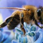 honey-bee-00