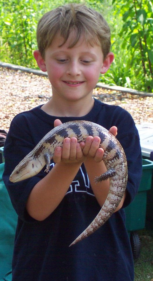 A kid holding a blue-tongued skink