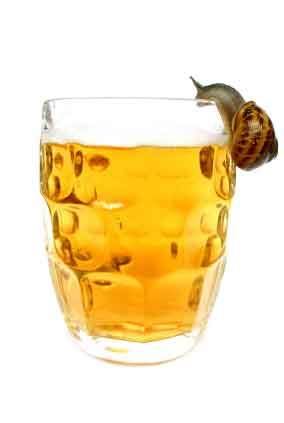"retrieved from ""http://www.sustainable-gardening-tips.com/images/snail-beer.jpg"""