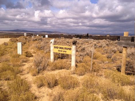 Bad Dog Road - Dead End