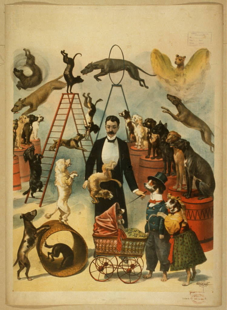 Trained dog act. Lithograph theatrical poster created and copyrighted in 1899 by Courier Litho. Co., Buffalo, N.Y.