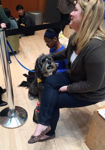 Therapy dongs from A New Leash on Life in the Taubman Atrium.