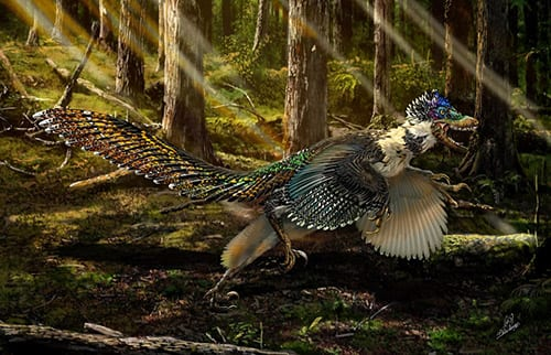 An artist's impression of Zhenyuanlong suni. This Velociraptor cousin posessed large, complex wings and looked bird-like. Image by Chuang Zhao.