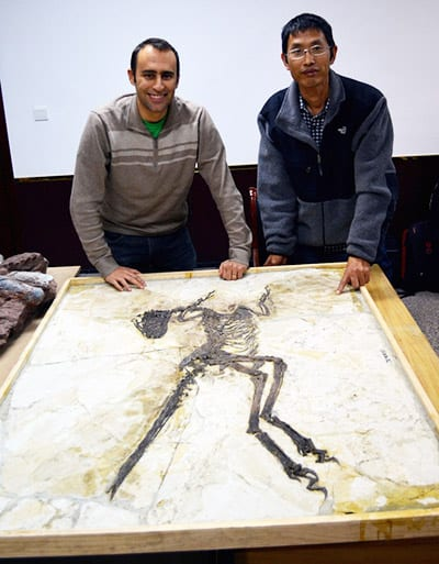 Jungchan Lü (right) with Steve Brusatte with the fossil of Zhenyuanlong suni, a new species of dinosaur with bird-like wings. Photo by Martin Kundrat.