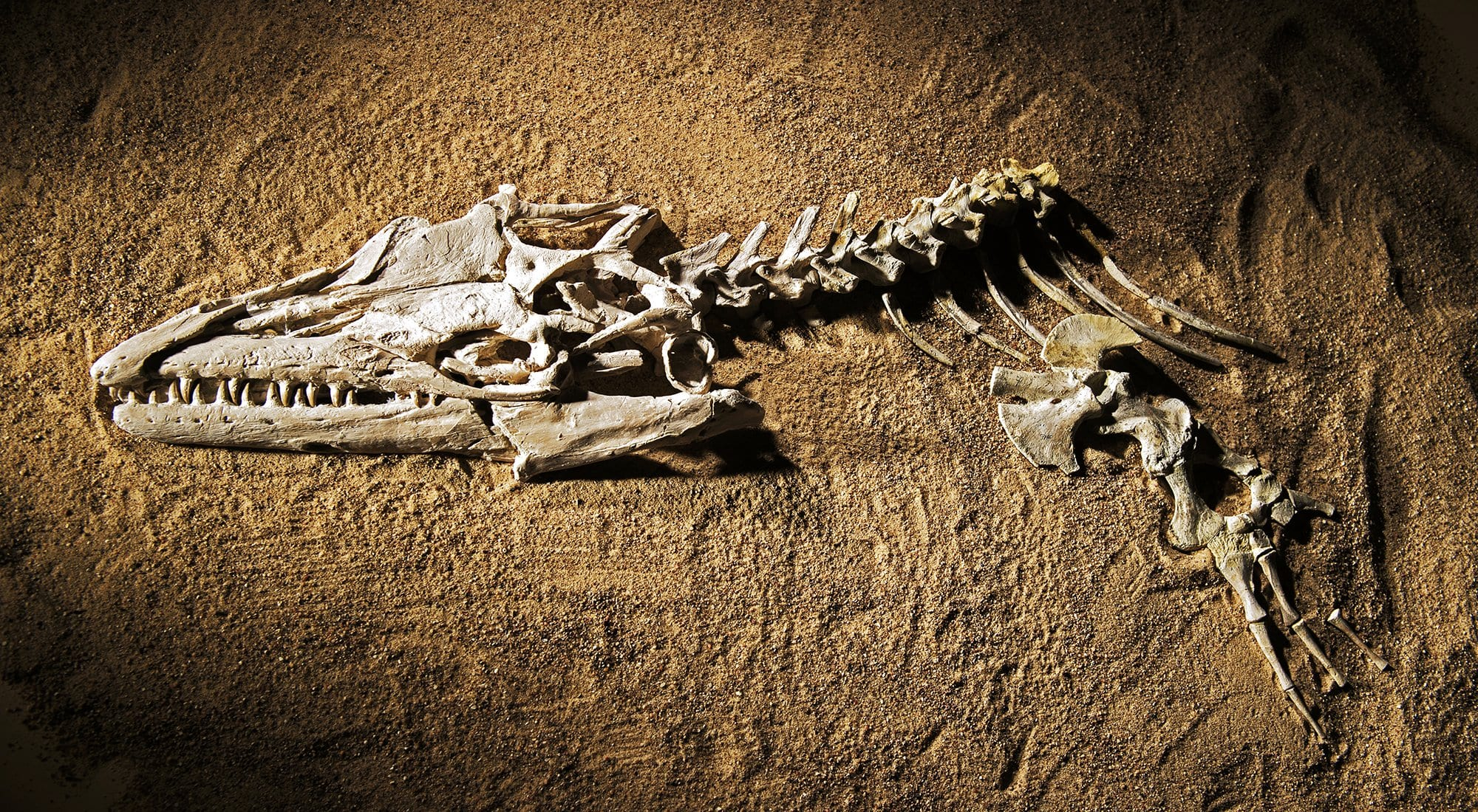 Fossils unearthed and prepared by SMU faculty and student researchers will be featured in a Smithsonian exhibition opening November 9.
