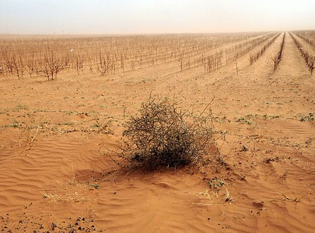 Stock photo of drought-stricken landscape