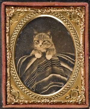 Cat with serape, ca. 1860