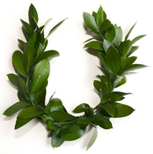 Stock photo of laurel wreath, signifying high honors