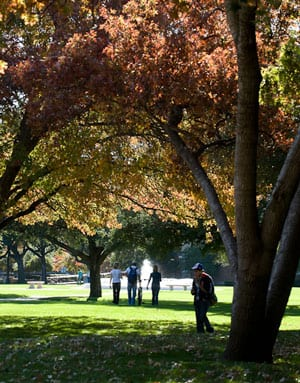 SMU students on the Main Quad in the shadow of a tree