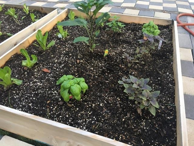 Seedlings growing in the community garden on SMU campus. Food desert. Vegetables. The Hunt Institute.