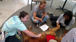 Three female students laugh and interact with each other petting a red golden retriever who is laying on his back enjoying the attention