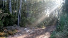 r-sunlight-on-the-trail-sm.jpg