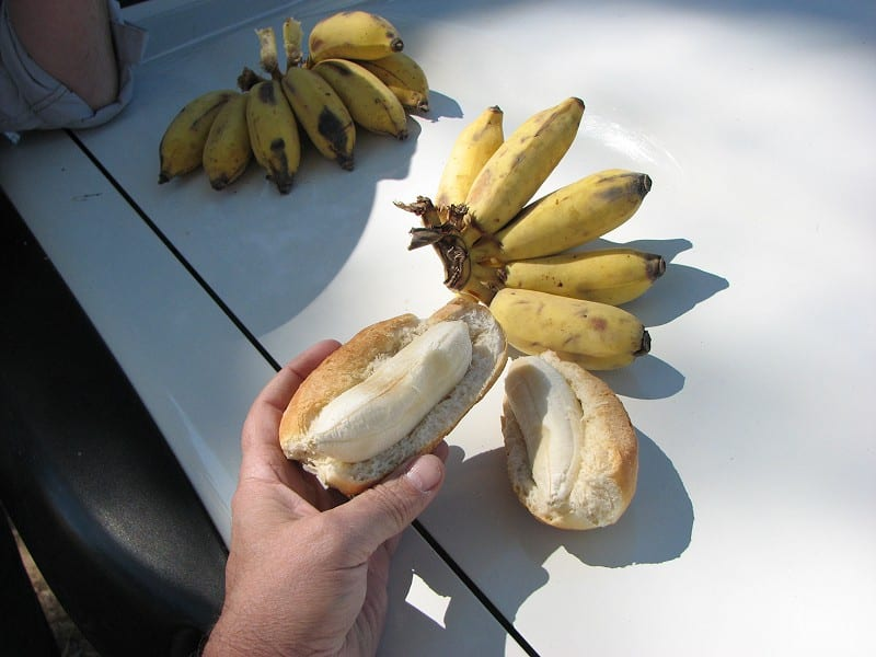 Banana-dogs for lunch, Angola