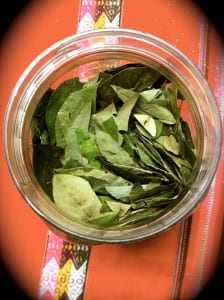 The coca leaves on the breakfast table that I put in my tea every morning.