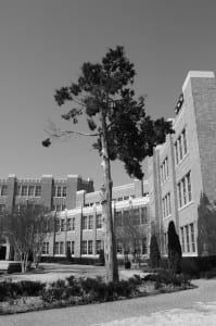 Tree in front of Little Rock Central High School