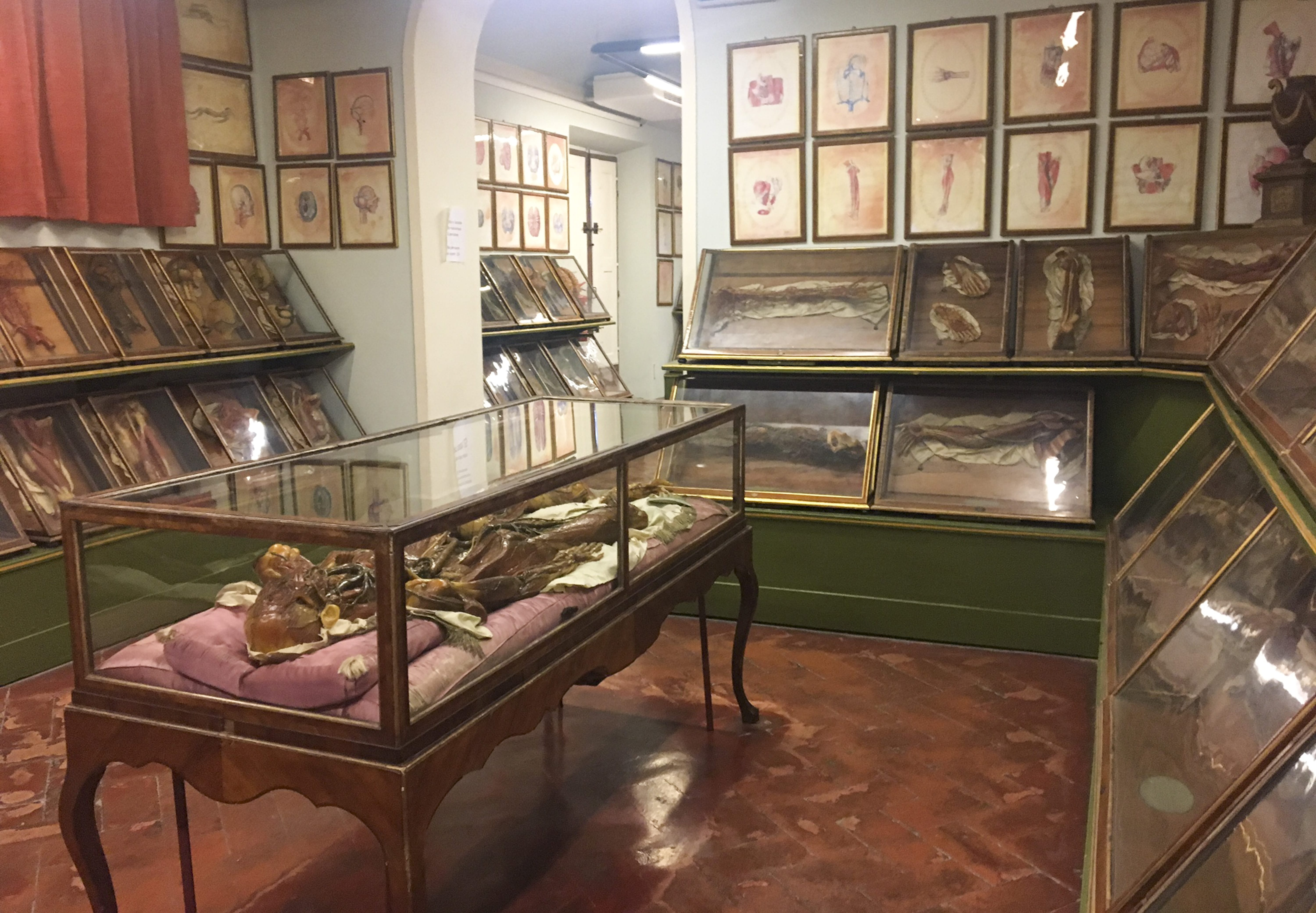 Inside La Specola, Florence's Museum of Zoology and Natural History