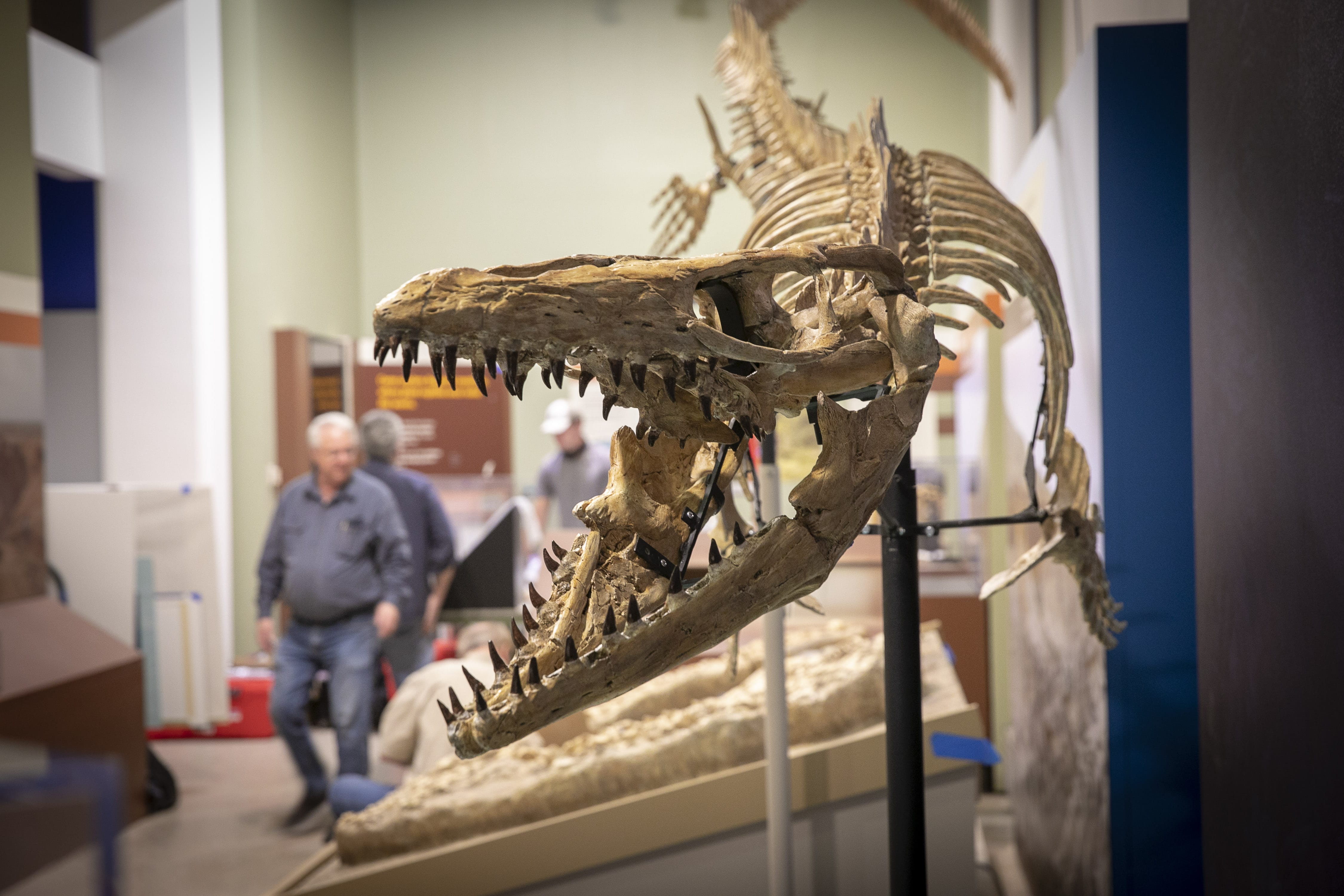 A dinosaur hunter's epic quest leads to the Smithsonian