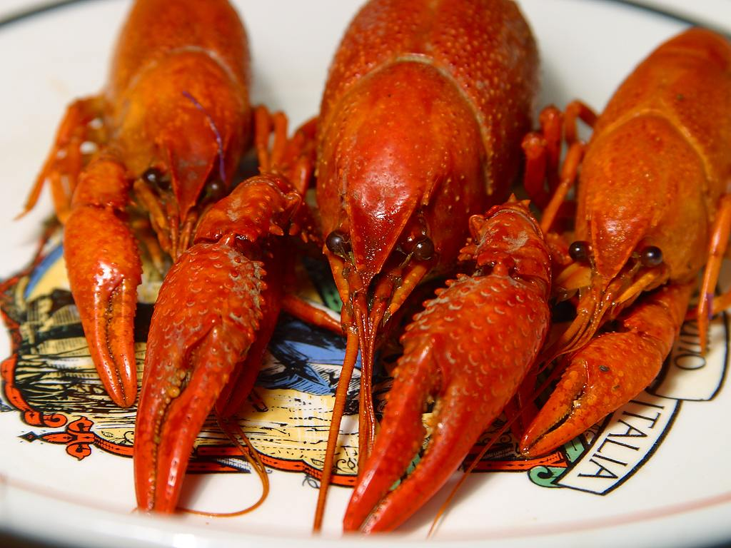 crawfish_4_bg_032603.jpg
