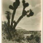 La Piramide del Sol, San Juan Teotihuacan, ca. 1905-1920, Brehme photographs of Mexico