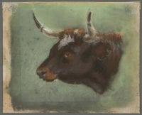 Ringed Horn Bull by Frank Reaugh, The Harry Ransom Center, University of Texas at Austin