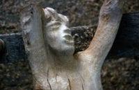Detail, Wood Carving, O. Medellin, No. 15