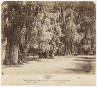 Bosque de Chapultepec [No. 93], ca. 1880s-1890s, DeGolyer Library, SMU.